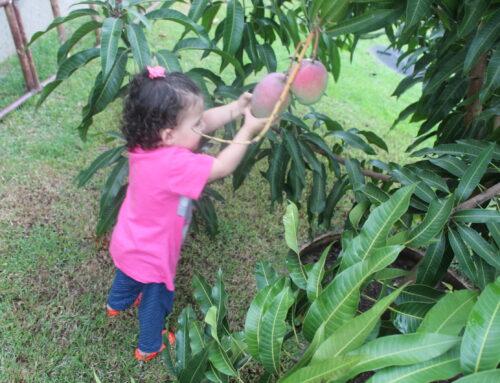 Montessori –  Dê a criança a chance de conquistar sua própria independência